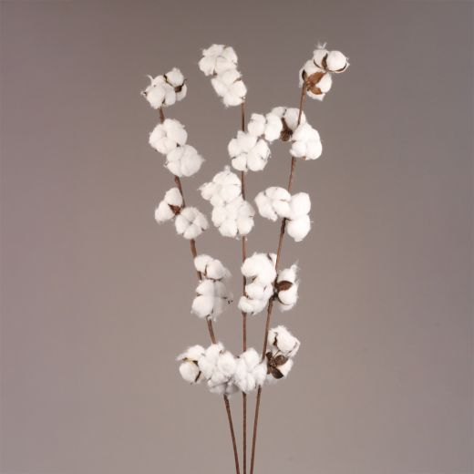 Cotton Stems