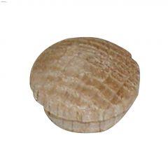 """5/16"""" Oak Mushroom Cap"""