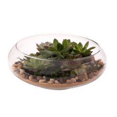 "Glass 10"" Diameter Terrarium Tabletop Bowl Planter"
