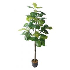 """60"""" Fiddle Fig Plant"""