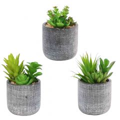 Black Etched Pot With plant-3 Assorted