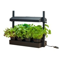 Micro Black Grow Light Garden Halifax Seed