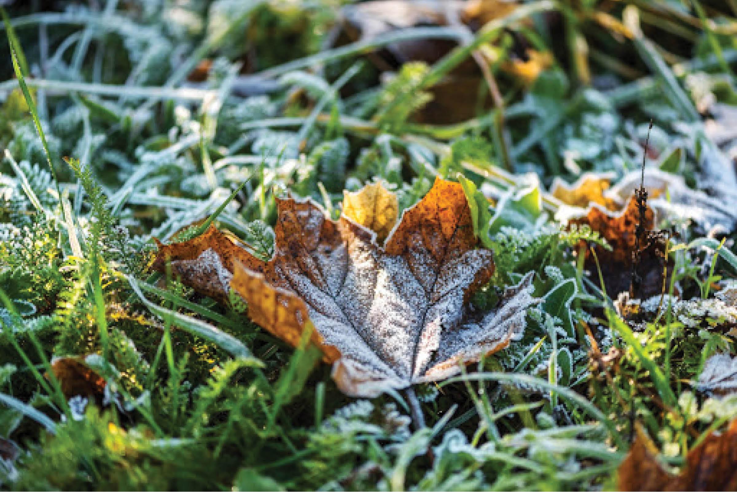 DIY on a Budget: Winterizing Your Yard