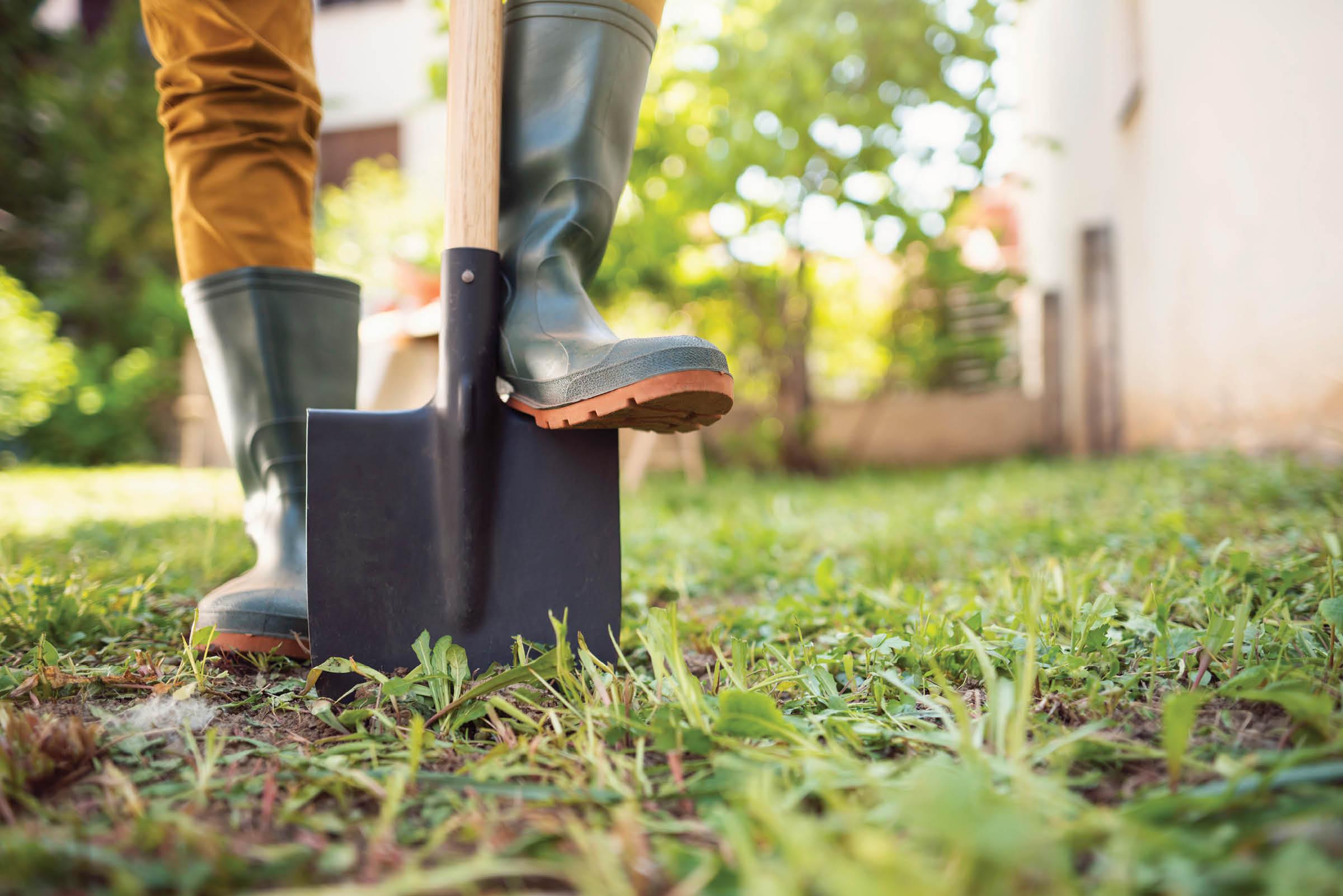 Five Autumn Garden Tasks