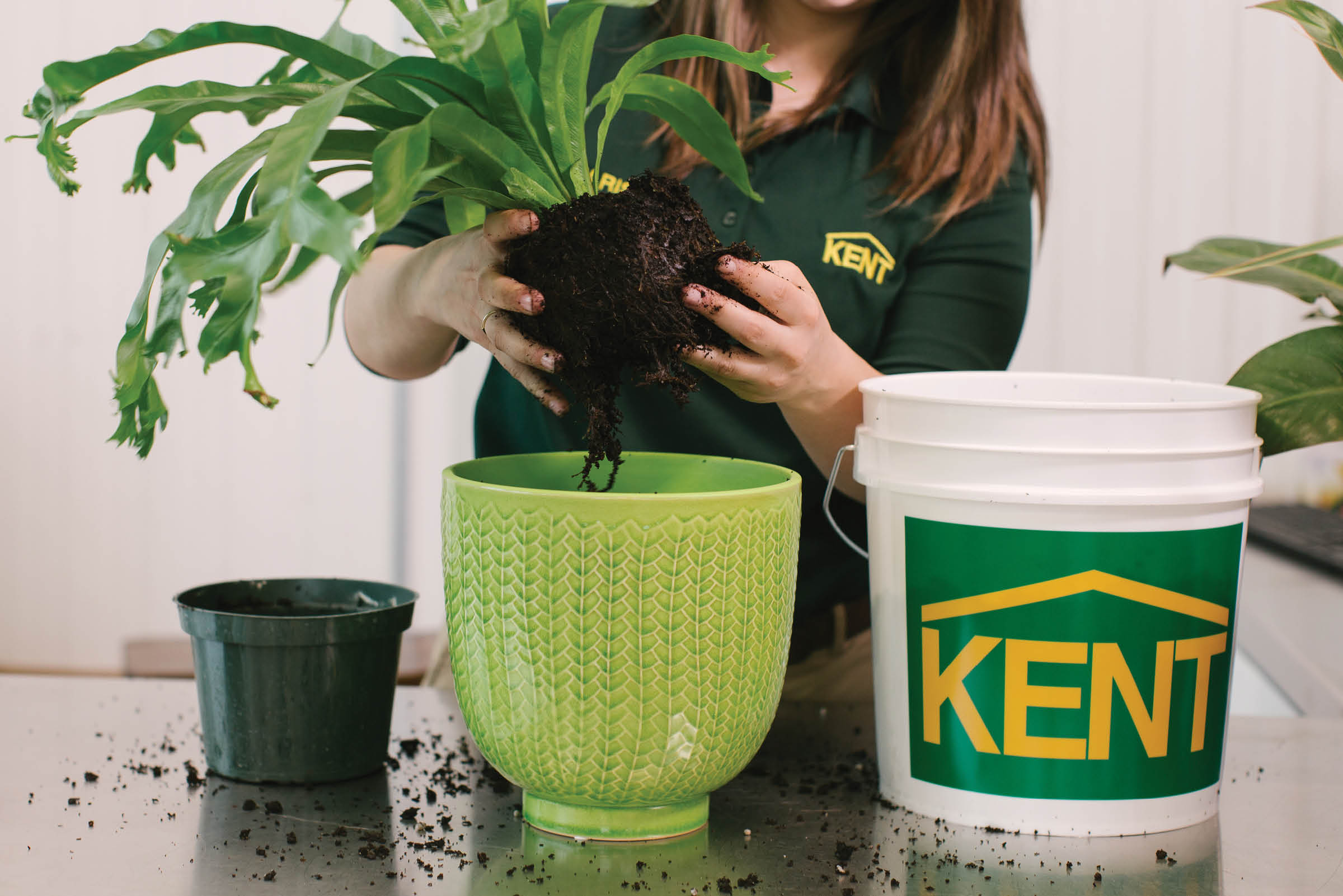 How to Repot Your Plants