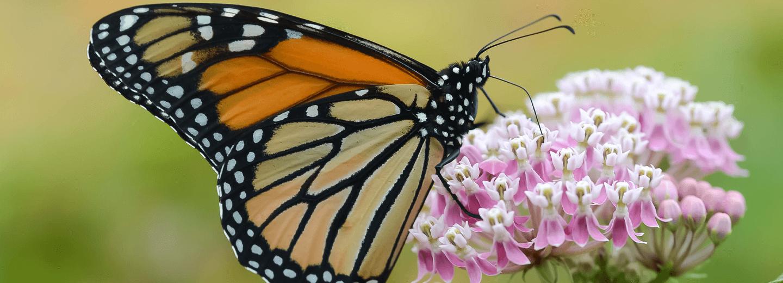 How to Create a Pollinator Garden