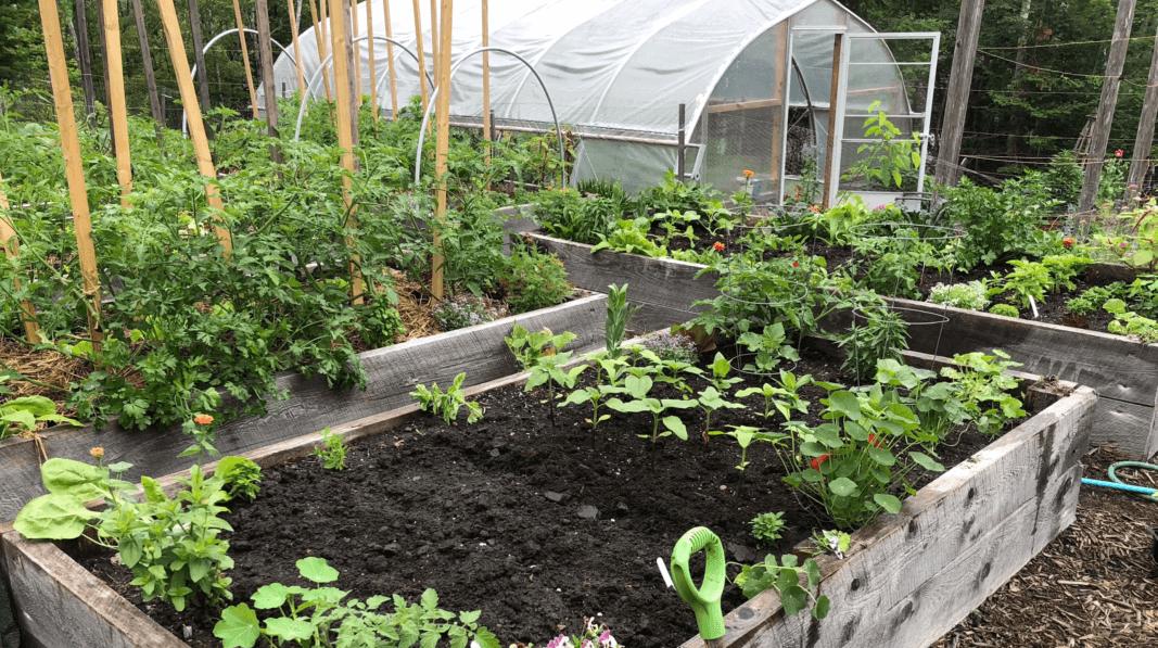 various plants in garden planter boxes