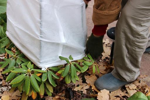 Cover your shrubs