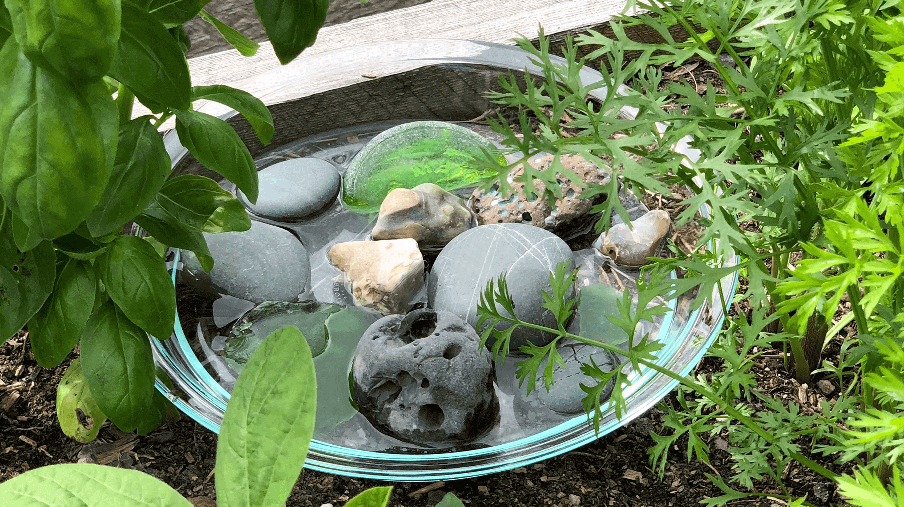 basin of water and stone for bees