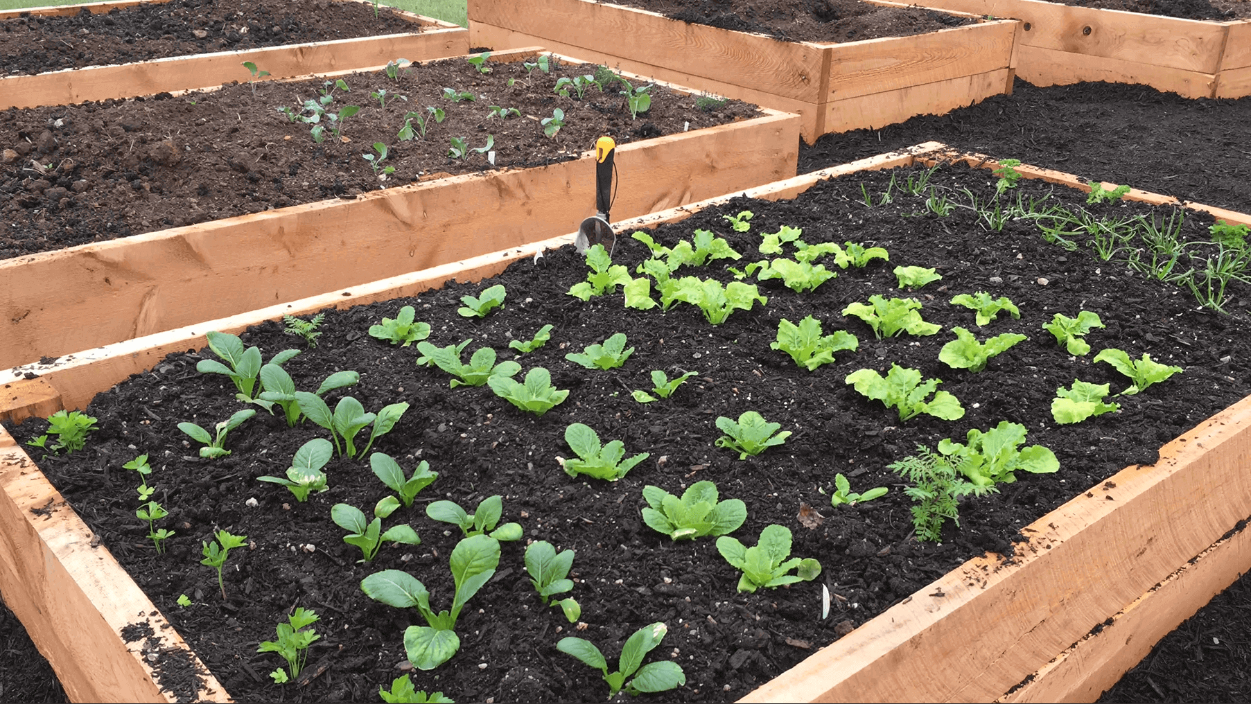 plants planted in soil in raised planter box